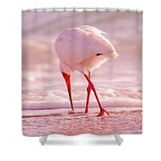 Meandering Beauty Cortez Beach Shower Curtain