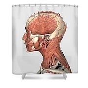 Medical Illustration Showing Human Head Shower Curtain