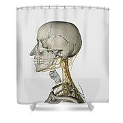 Medical Illustration Showing Thyroid Shower Curtain