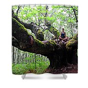 Meditation On Centenary Tree  Shower Curtain