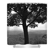 Meditation Tree  Shower Curtain
