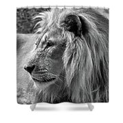 Meditative Lion In Black And White Shower Curtain
