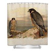 Mediterranean Peregrine By Thorburn Shower Curtain