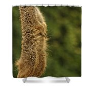 Meercat Shower Curtain
