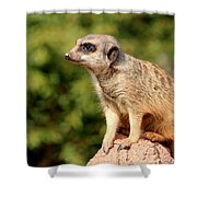 Meerkat 1 Shower Curtain