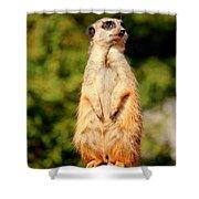 Meerkat 2 Shower Curtain