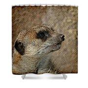 Meerkat 3 Shower Curtain by Ernie Echols