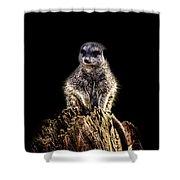 Meerkat Lookout Shower Curtain
