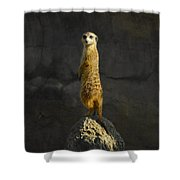 Meerkat On The Watch Shower Curtain
