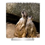 Meerkats Keeping An Eye Out Part 2 Shower Curtain