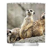 Meerkats Shower Curtain