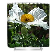 Mega-poppy Shower Curtain