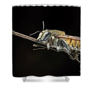 Megachilidae Shower Curtain