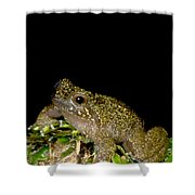 Mehu�n Green Frog Shower Curtain