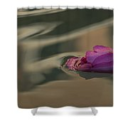 Melancholy - Discarded Rosebud Floating In A Fountain Shower Curtain