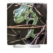 Mellers Chameleon Portrait 3 Shower Curtain