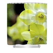 Mello Yellow Shower Curtain