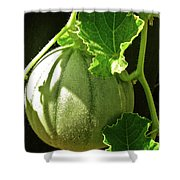 Mellow Mellon Shower Curtain