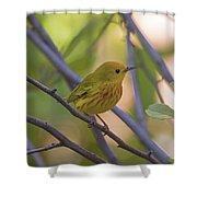 Mellow Yellow - American Warbler - Setophaga Petechia Shower Curtain