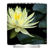 Mellow Yellow Water Lily Shower Curtain