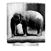Melancholy Elephant Shower Curtain