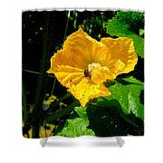 Melon's Flower 12 Shower Curtain