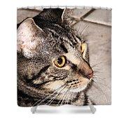 Melvin The Wondercat Shower Curtain