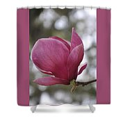 Mepkin Abbey Pink Magnolia Shower Curtain