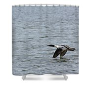 Merganser Duck Shower Curtain