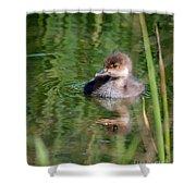 Merganser Duckling Shower Curtain