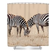 Merging Zebra Stripes Shower Curtain