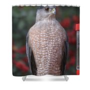 Coopers Hawk I Shower Curtain