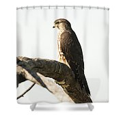 Merlin Hunting Shower Curtain