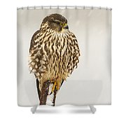 Merlin In A Snow Storm Shower Curtain