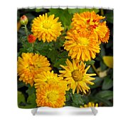Merry Marigolds Shower Curtain