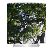Mesquite Tangle Shower Curtain