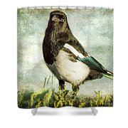 Message From The Magpie Shower Curtain by Belinda Greb