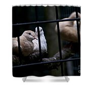 Messenger Of Peace Shower Curtain