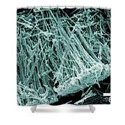 Metal-oxide Nanotubes, Sem Shower Curtain