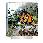 Metamorphosis Of The Monarch Shower Curtain