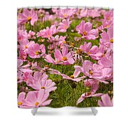 Mexican Aster Flowers 1 Shower Curtain
