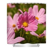 Mexican Aster Flowers 2 Shower Curtain