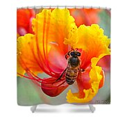 Mexican Bird Of Paradise Shower Curtain