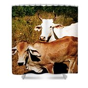 Mexican Cattle Shower Curtain