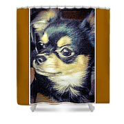 Mexican Chihuahua Puppy Shower Curtain