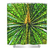 Mexican Fan Palm Leaf Shower Curtain