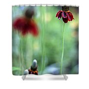 Mexican Hat Flower Shower Curtain