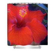 Mexican Hibiscus Shower Curtain