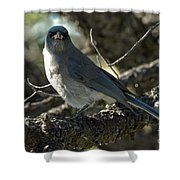 Mexican Jay Shower Curtain