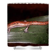 Mexican Palm Salamander Shower Curtain
